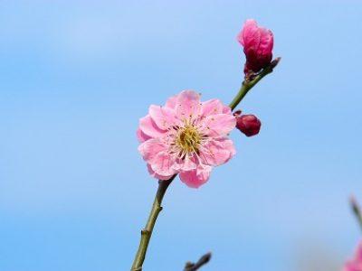 春の心身の変化を促す要素