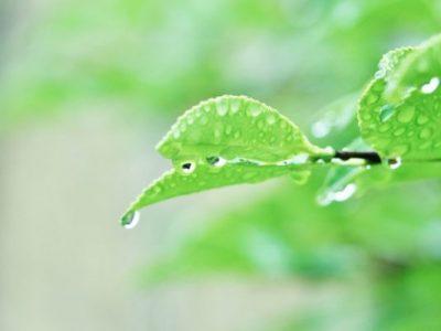足と腎臓〜梅雨の体(2)