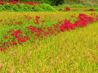 秋の体〜肌の乾燥と冷えの始まり、咳・胃痛etc.