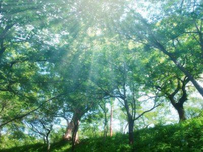 季節と体・心(2、初夏~秋)