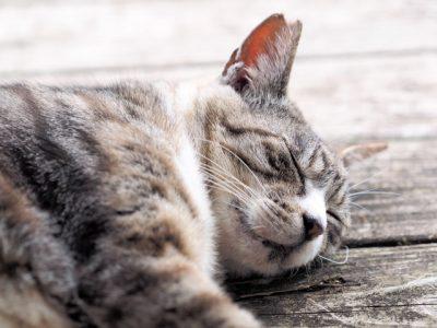 眠りと夢の話