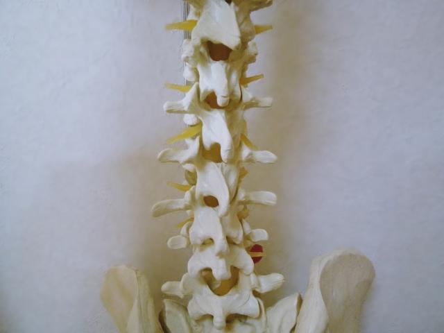 背骨(腰椎)