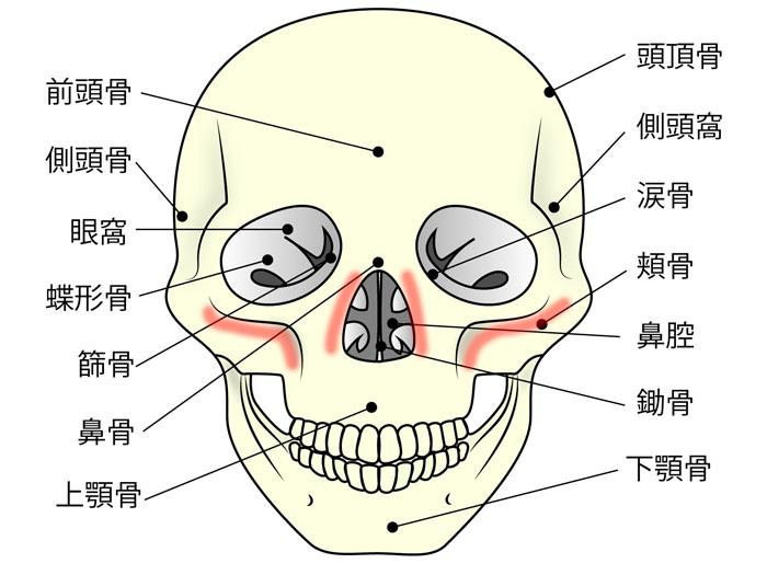 鼻骨、頬骨